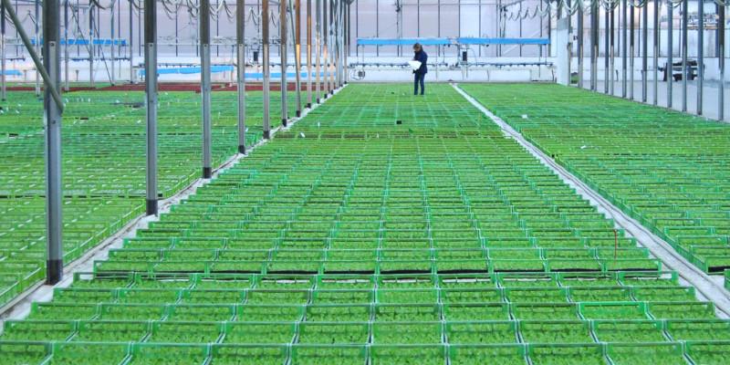 Agrilend   projet l  saudel image projet plants maraichage df2552e6