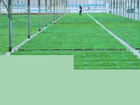 Agrilend   projet l  saudel image vignette plants maraichage e4bbad1e