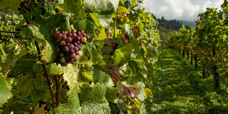 Agrilend projet soulier vin raisin f887d4d4