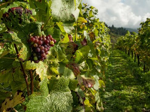 Agrilend vignette soulier vin raisin c23d7a51