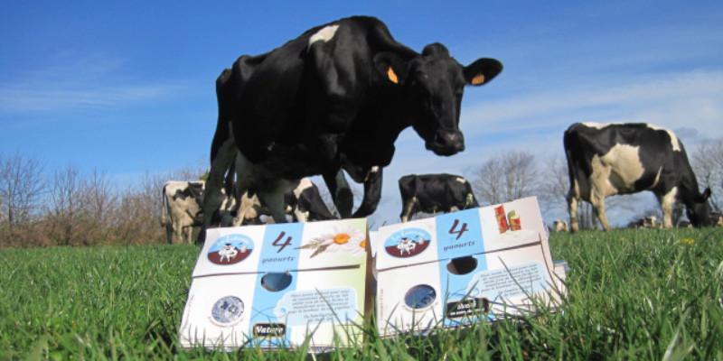 Image projet gaec gorrequer elevage vache yaourts bio 3be5e0ae